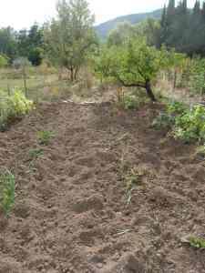 "Le jardin saccagé au terrain ""Paul"" / der verwüstete Garten ""Paul"""